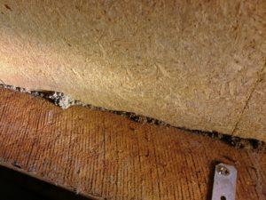 Building Pest Inspections Melbourne